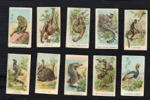 "Collectible  cigarette card Animals & Birds. 1923 by ""Eagle Bird"""